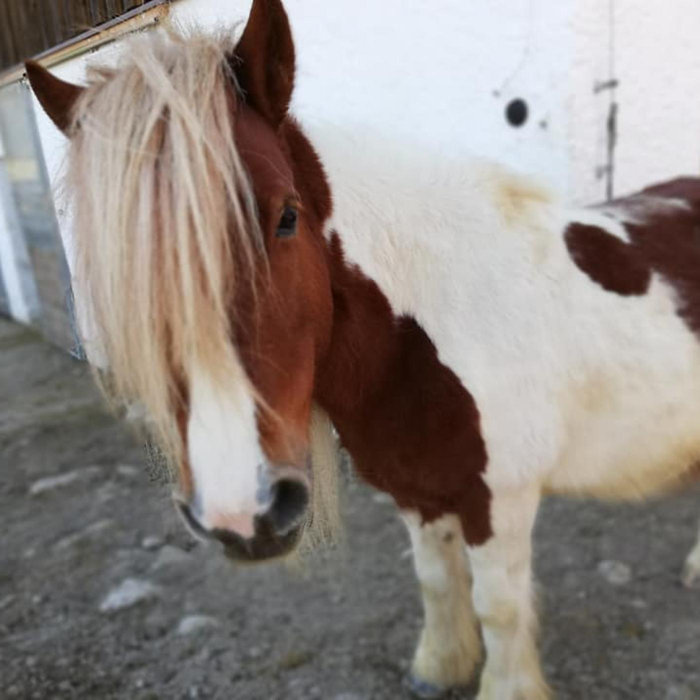 Pony in der Kreativwerkstatt Pippi Lotta in Straßwalchen.