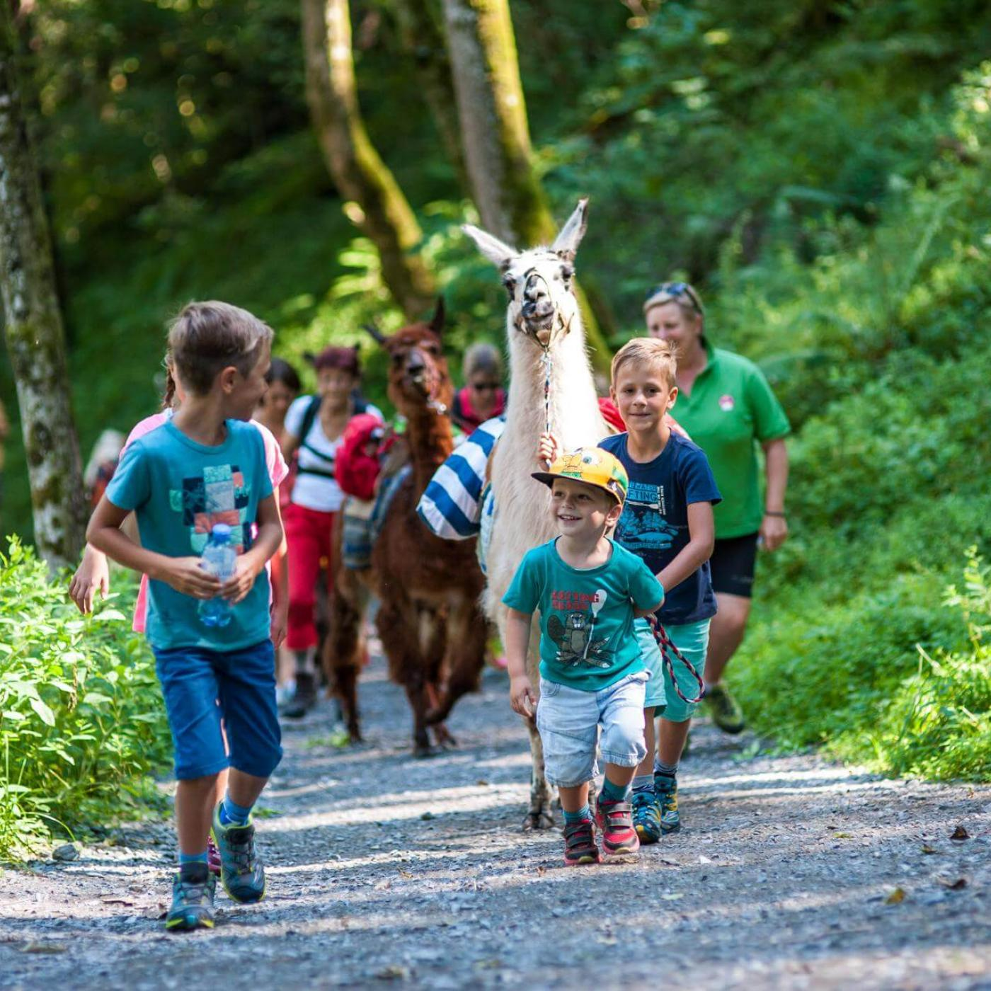 Lamawandan mit Kindern in der Pension Alpenrose in Kaprun.